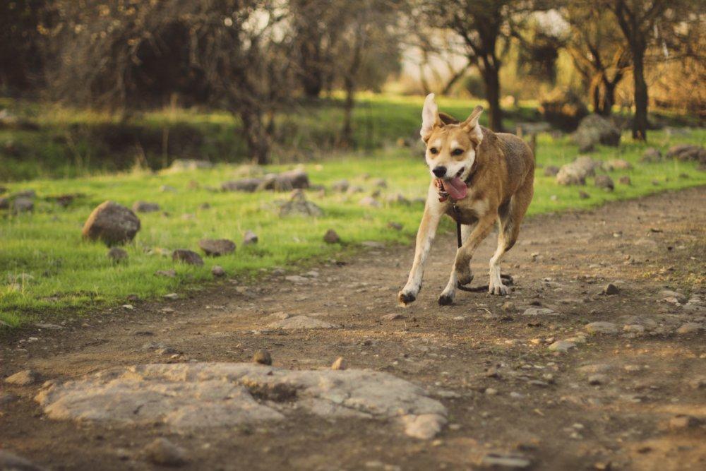 Do Dogs Like Trampolines