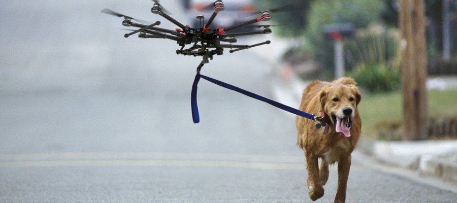 Why Using Drones With Your Dogs Is The Best Thing Ever