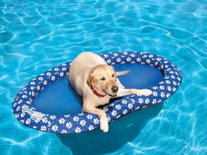 Stylish Dog Beds That Floats On Water