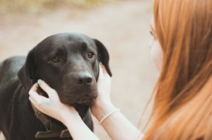 Why Hiking With Your Dog Can Be A Therapeutic Experience